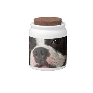 Terrier sonriente de Boston con el cuello Platos Para Caramelos