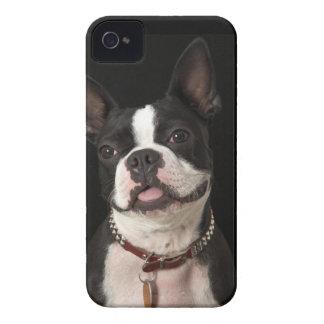 Terrier sonriente de Boston con el cuello Funda Para iPhone 4 De Case-Mate