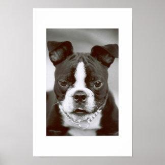 """Terrier """"Tipo-Capone """" de Boston Posters"""