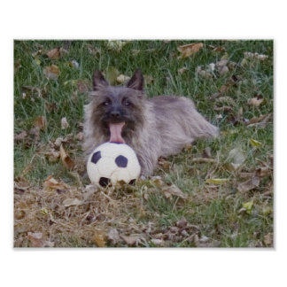 Terrier with a soccer ball poster