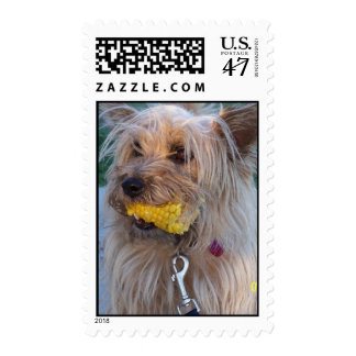 terrier with corn cob postage