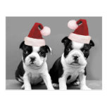 Terrieres de Boston del navidad Tarjetas Postales