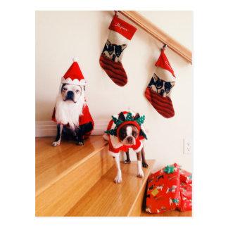 Terrieres de Boston en trajes del navidad Postal
