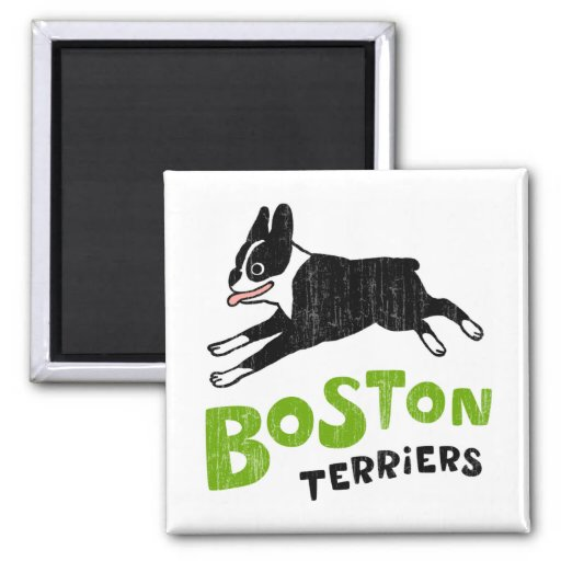 Terrieres de Boston Imán Cuadrado
