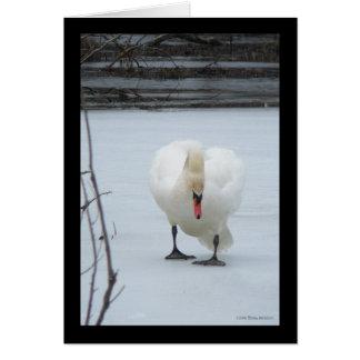 Territorio del cisne tarjeta de felicitación