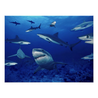 Terrores de los tiburones del profundo poster
