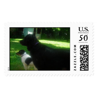 Tesla and baby Trinity Postage
