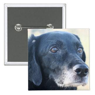 Tess - Black Labrador Photo-3 Button