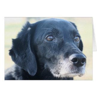 Tess - Black Labrador Photo-3 Card