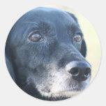 Tess - Black Labrador Photo-3 Sticker