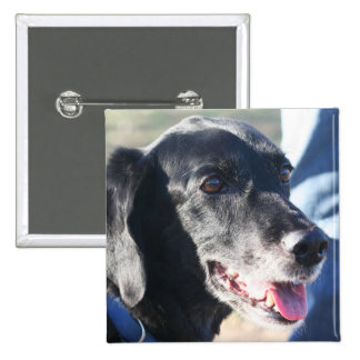 Tess - Black Labrador Photo-4 Pins