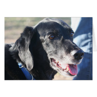 Tess - Black Labrador Photo-4 Card