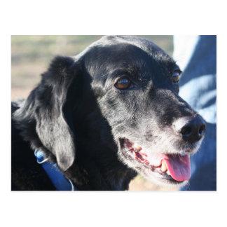 Tess - Black Labrador Photo-4 Postcard