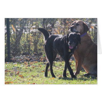 Tess - Black Labrador Priscilla Photo-1 Greeting Card