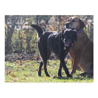 Tess - Black Labrador Priscilla Photo-1 Postcard