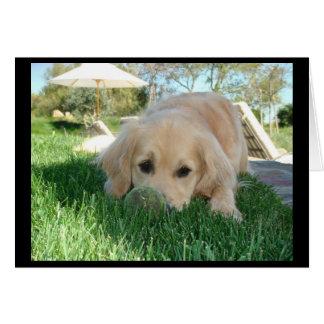 Tess' Dog Days Card