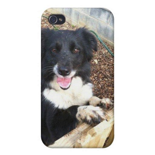 """""""Tess"""" el caso de Collie~Phone de la frontera iPhone 4/4S Carcasa"""