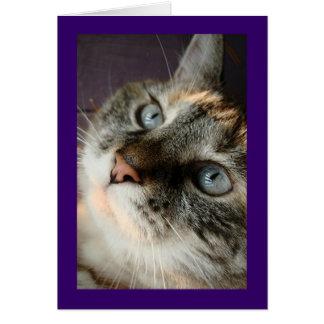 Tess el gato Notecards Tarjeta Pequeña