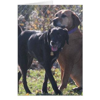 Tess - Labrador - Priscilla Photo-2 Card