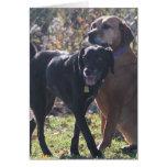 Tess - Labrador - Priscilla Photo-2 Greeting Card