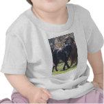 Tess - Labrador - Priscilla Photo-2 Shirt