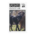 Tess - Labrador & Priscilla Photo-2 Stamps