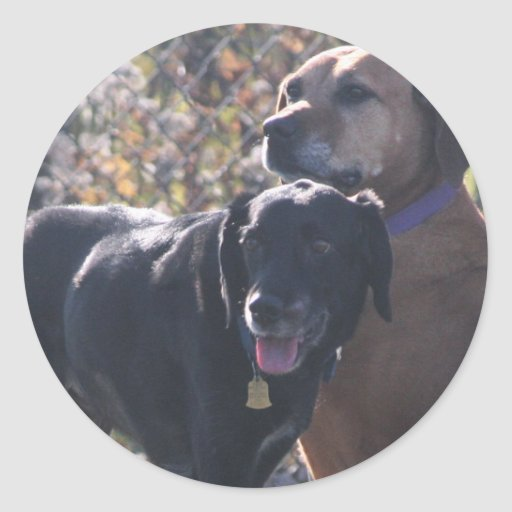 Tess - Labrador - Priscilla Photo-2 Sticker