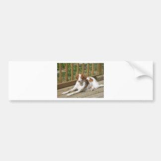 Tessa my little puppy bumper sticker