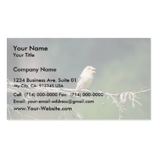 Test Bird on limb, 392 Double-Sided Standard Business Cards (Pack Of 100)