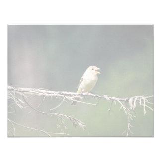 Test Bird on limb, 392 Invitations