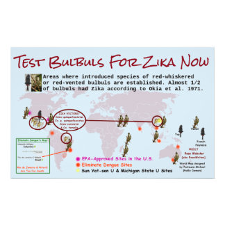 Test Bulbuls For Zika 2-Sided Flyer by RoseWrites