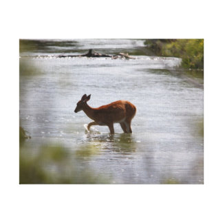 Testing the water stretched canvas print