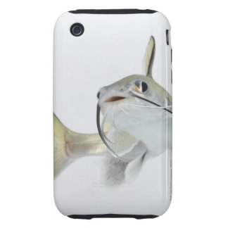 Tete sea catfish (Hexanematichthys seemanni) 2 Tough iPhone 3 Covers