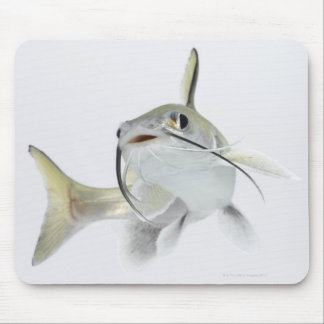 Tete sea catfish (Hexanematichthys seemanni) 2 Mouse Pad
