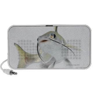 Tete sea catfish (Hexanematichthys seemanni) 2 Speakers