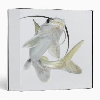 Tete sea catfish (Hexanematichthys seemanni) Binder
