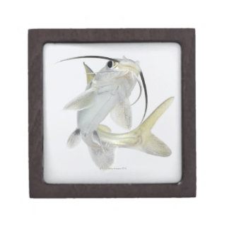 Tete sea catfish (Hexanematichthys seemanni) Jewelry Box