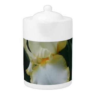 Tetera amarilla y blanca hermosa de la flor del ir