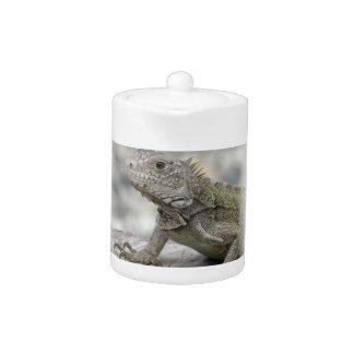 Tetera de cuernos de la iguana