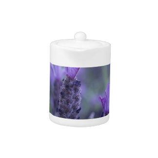 Tetera de la foto de la flor de la lavanda