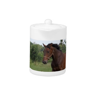 Tetera del caballo de bahía