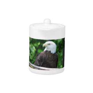 Tetera del pájaro de Eagle calvo