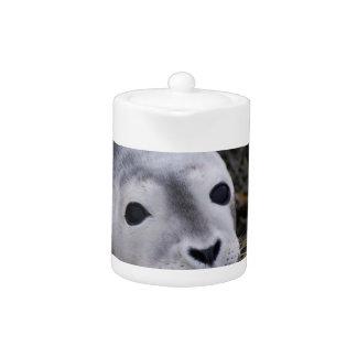 Tetera dulce de la cría de foca