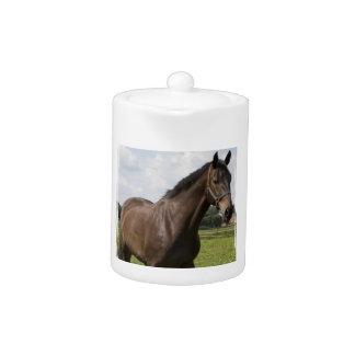Tetera excelente del caballo