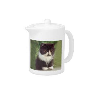 Tetera persa blanco y negro del gatito