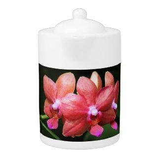 Tetera roja de las orquídeas