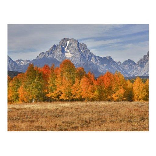 Teton magnífico NP, soporte Moran y árboles del ál Postal