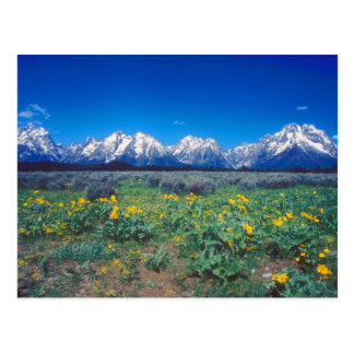 Teton Mountains and Wildflowers Postcard