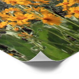 Tetons magnífico con las flores de la nieve y de l impresiones