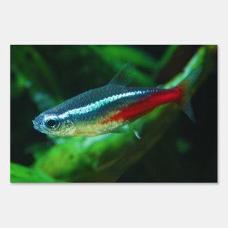 Tetra Paracheirodon de neón Innesi de los pescados